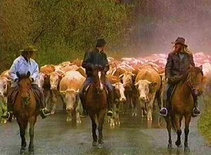 Łemkowskie przępędy bydła i koni huculskich