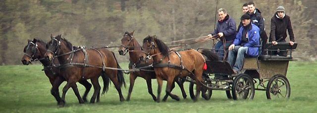 Zaprzęg koni huculskich